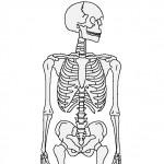 人体の構造を知るのに便利「BioDigital Human」
